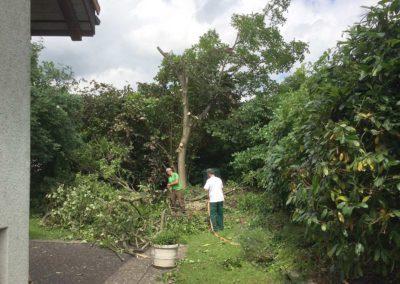 Gartenunterhalt, Baumschnitt
